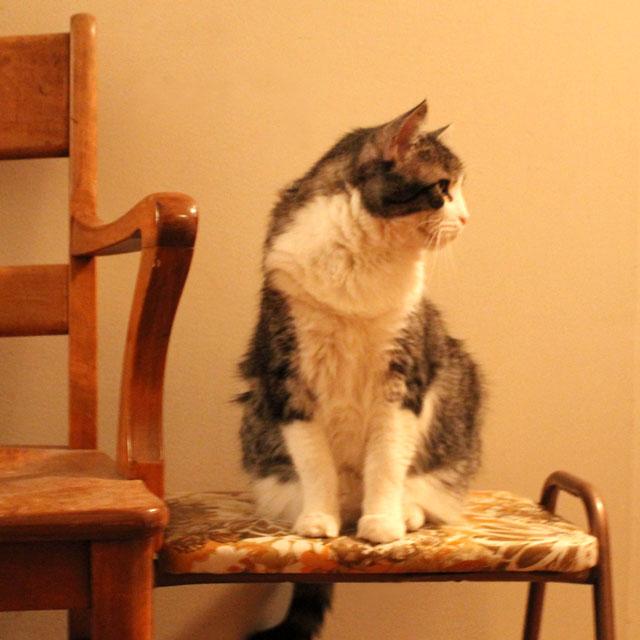 eddie cat 02