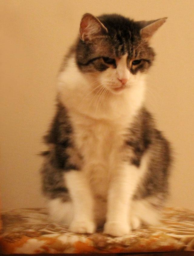 eddie-cat