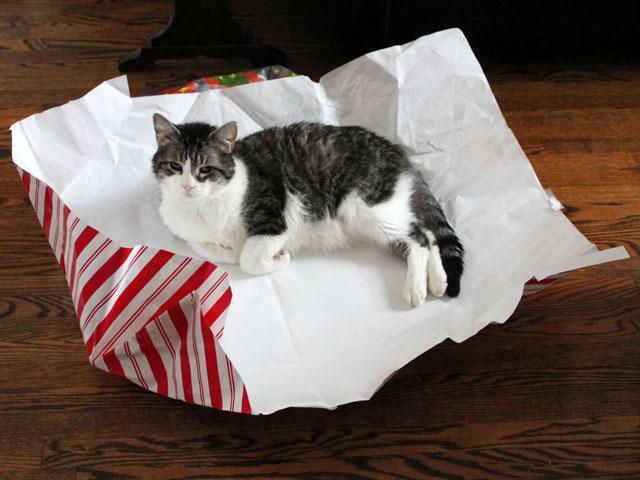 eddie-cat-christmas-morning-2014