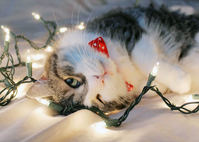 eddie cat christmas portrait 2014 02