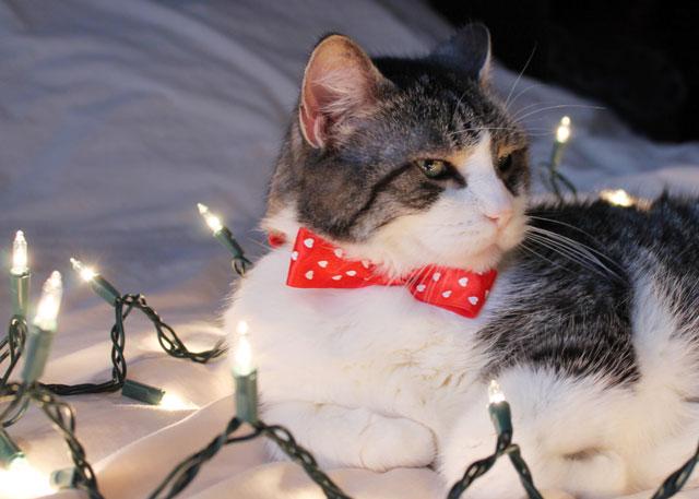 eddie cat christmas portrait 2014 03