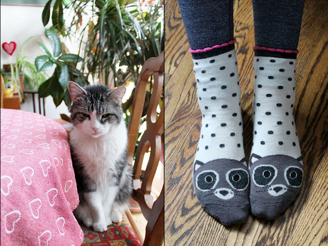 eddie-at-the-table-and-cute-raccoon-socks