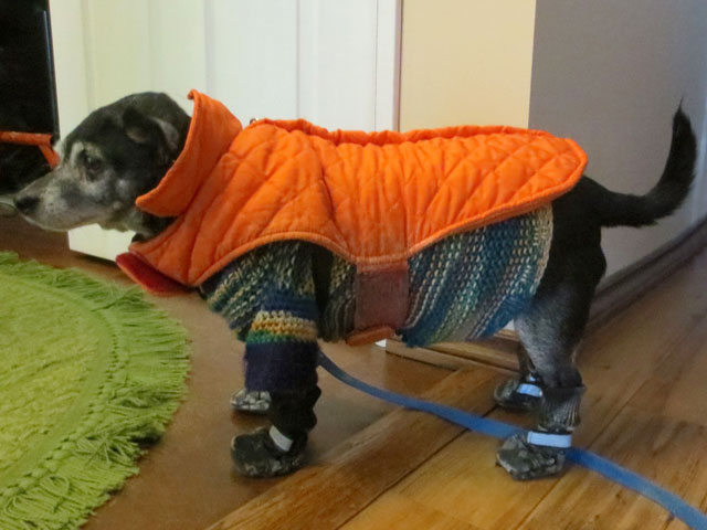 kiki-dog-in-winter-clothes