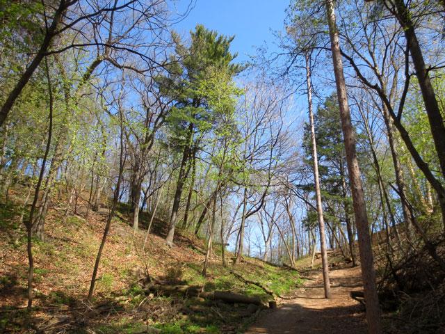 high park toronto natural growth