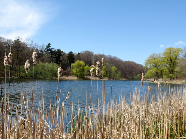 on the bank of grenadier pond in high park