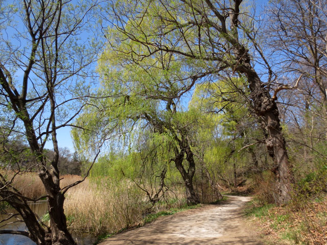 path beside grenadier pond high park toronto