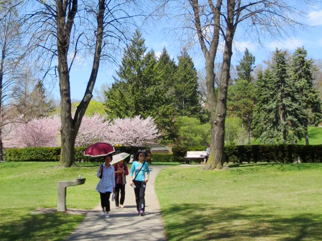 seeing-the-cherry-blossom-trees-high-park
