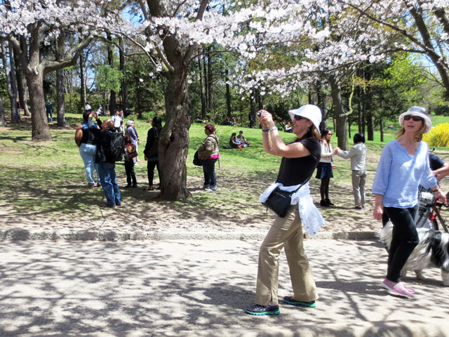 taking-photos-of-cherry-blossoms-high-park-toronto