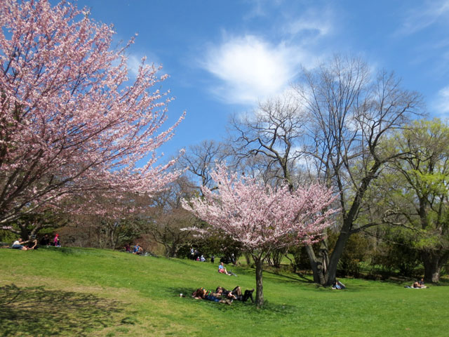 under-the-shade-of-a-cherry-blossom-tree-high-park