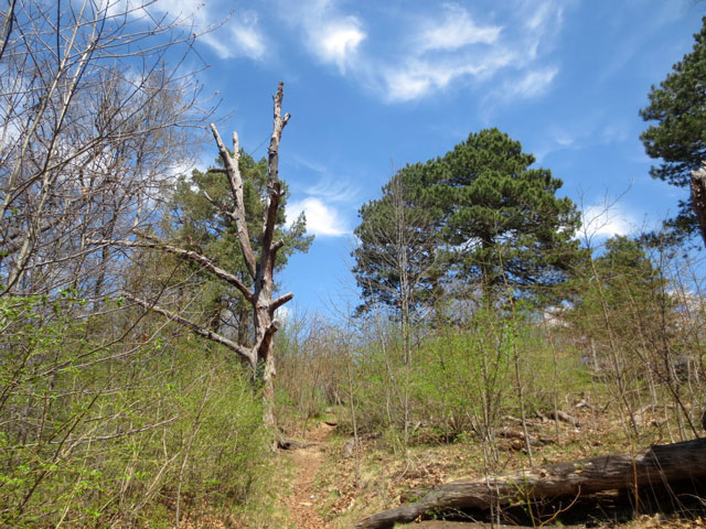 wild growth high park toronto
