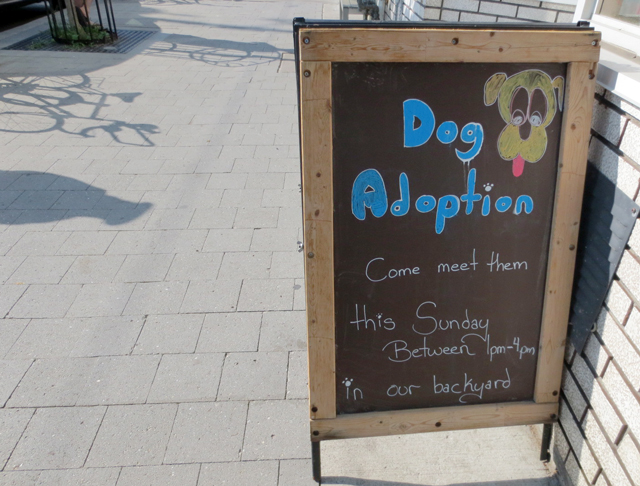 dog-adoption-sign
