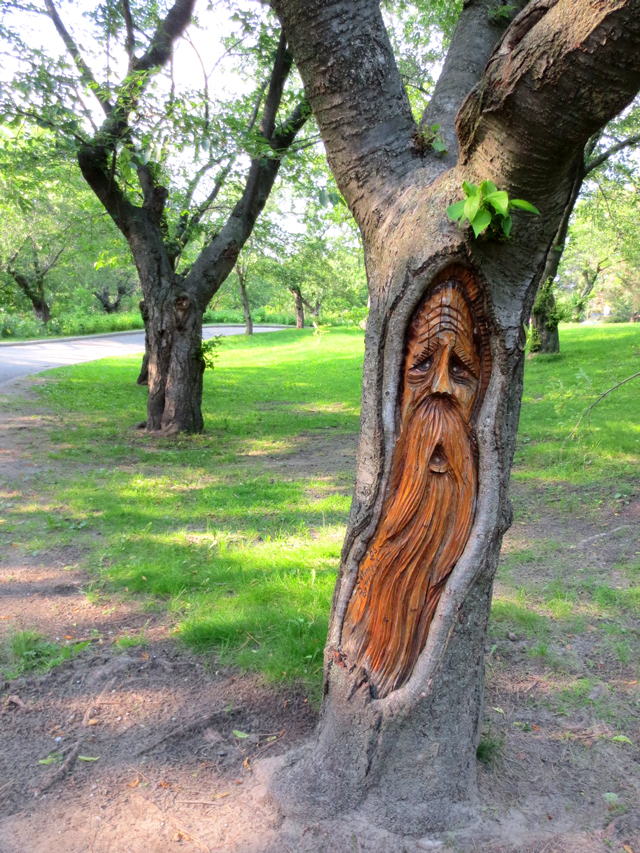 face carved into a tree high park