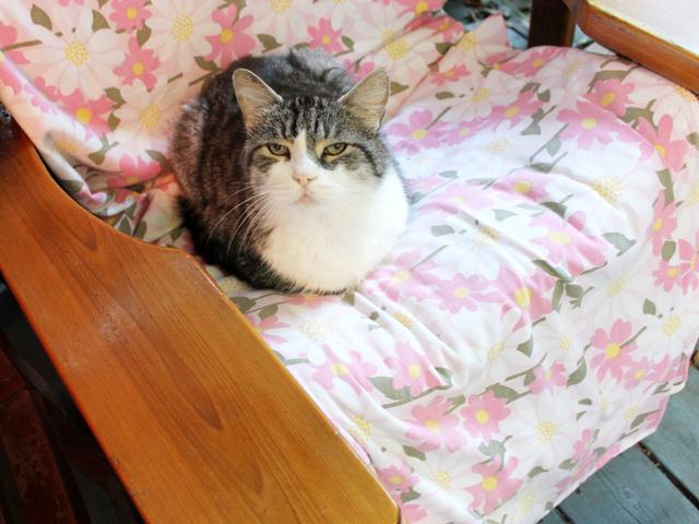 eddie cat seat stealer