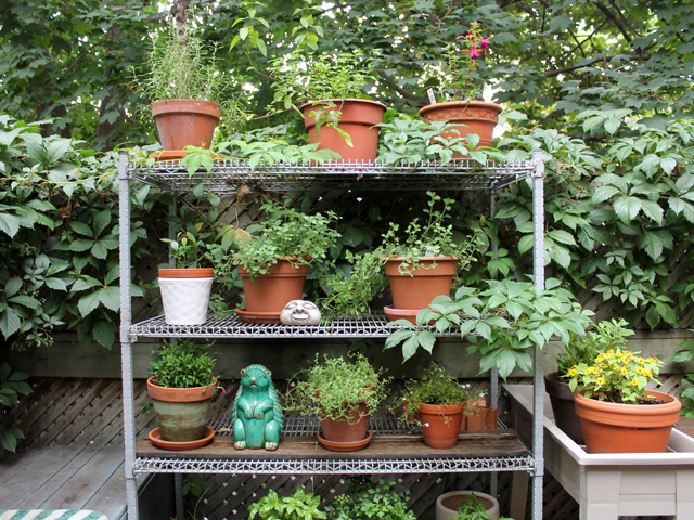 outdoor potted plant garden on vintage shelf
