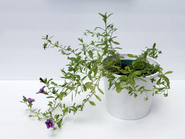 thrift store ceramic plant pot