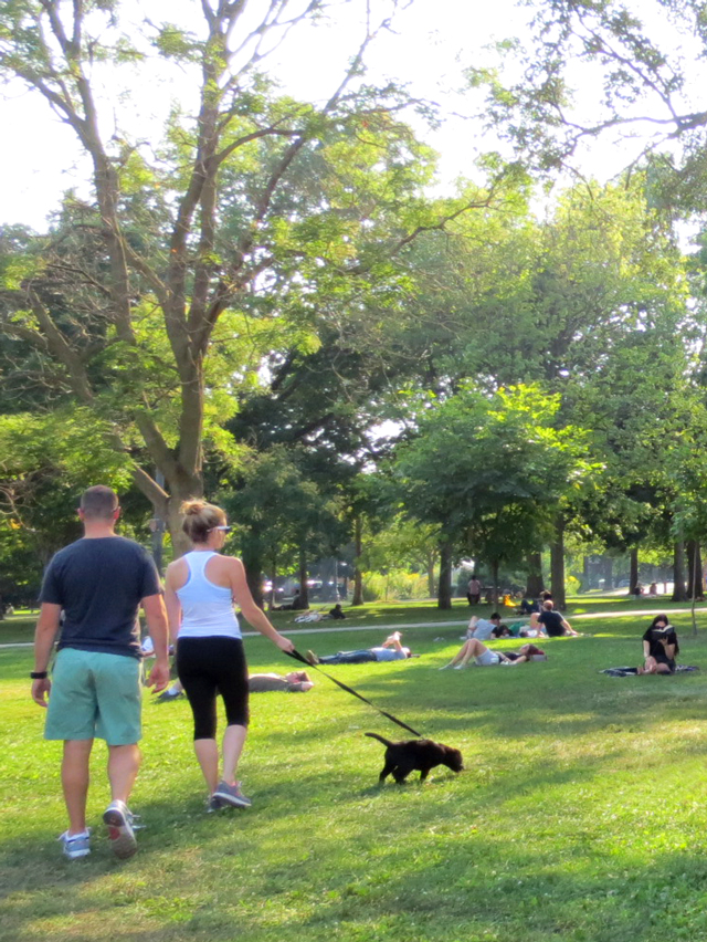 walking-a-puppy-in-the-park