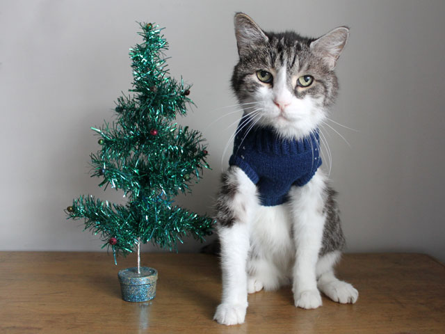 cat-christmas-portrait-wearing-sweater-sitting-with-a-christmas-tree