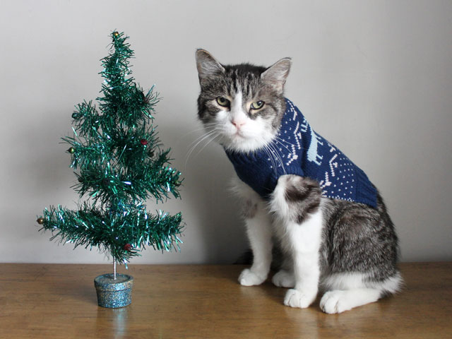 cat-in-a-sweater-with-a-christmas-tree.j