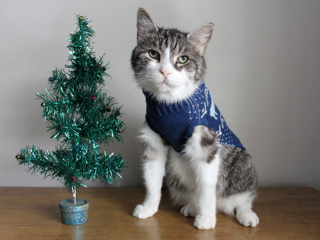 eddie-the-cat-in-a-sweater-christmas-portrait