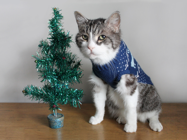 eddie-the-cats-portrait-wearing-a-sweater-standing-with-a-christmas-tree