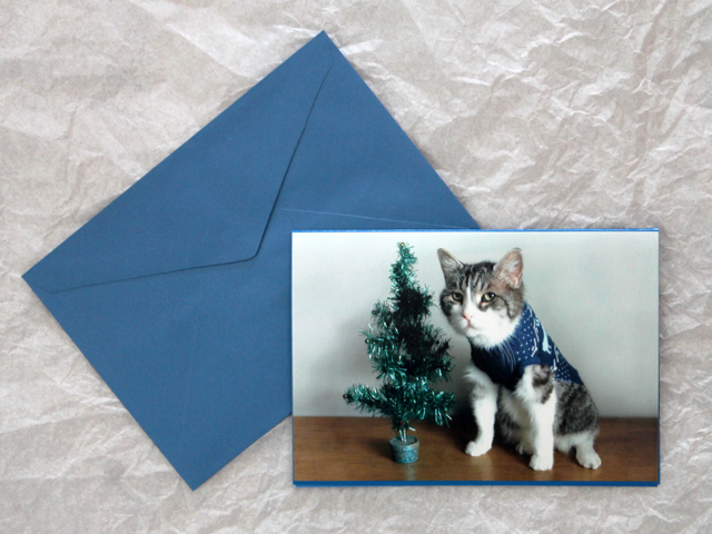 handmade-greeting-card-made-with-a-photograph-diy-christmas-cat