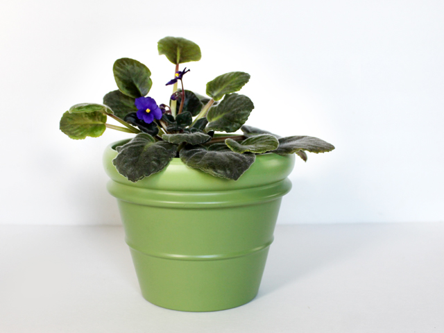 plant pot with african violet