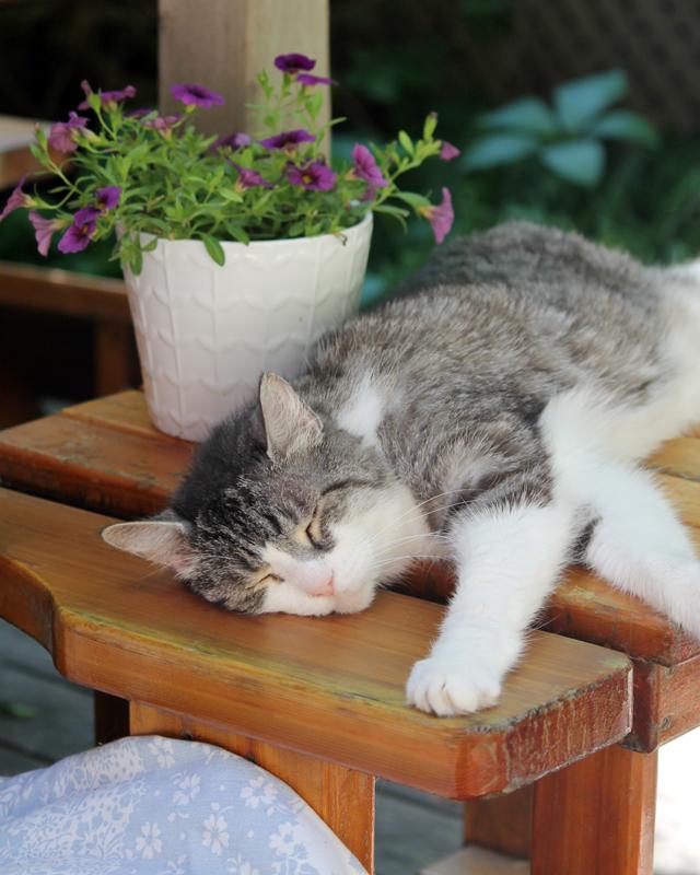 eddie-sleeping