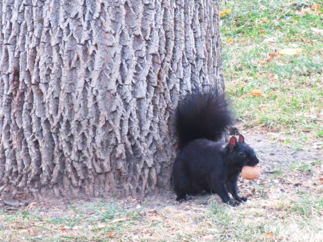 squirrel-with-a-nut