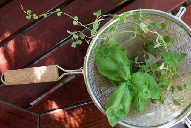 fresh-basil-and-oregano