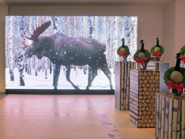 lifesize moose moving image at the husdons bay store downtown toronto