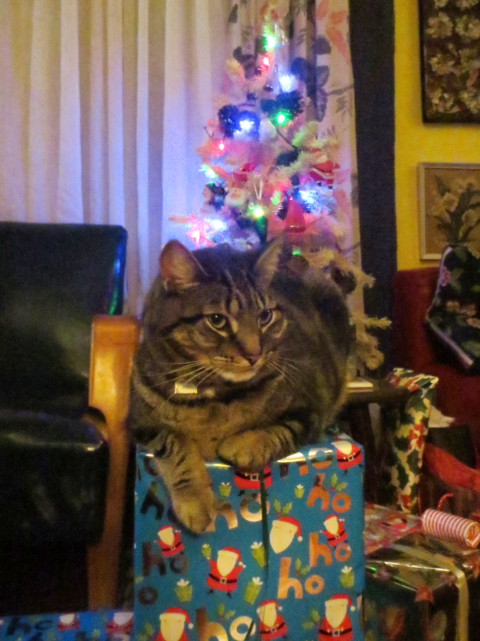 frankie the cat at christmas