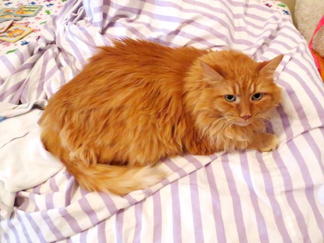 gatsby the cat
