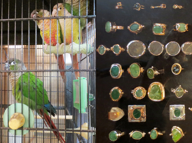 parakeets and handmade rings at the beadery shop queen street west toronto