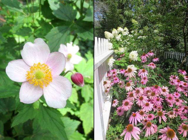 flowers at riverdale farm toronto