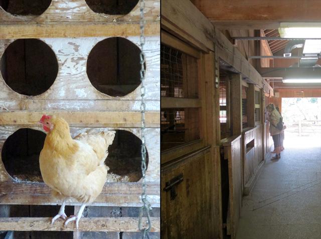 poultry barn riverdale farm toronto