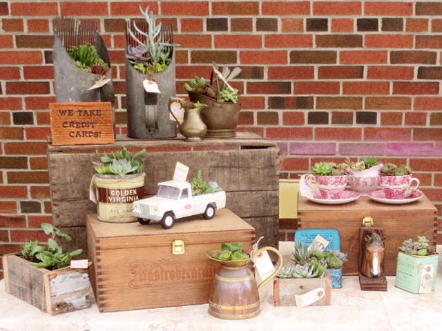 succulent plants in cute planters by snaffle and main at parkdale flea market toronto