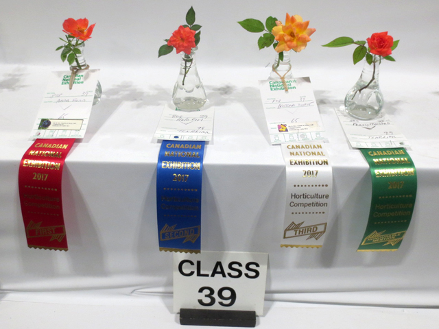 horticulture competition roses canadian national exhibition toronto