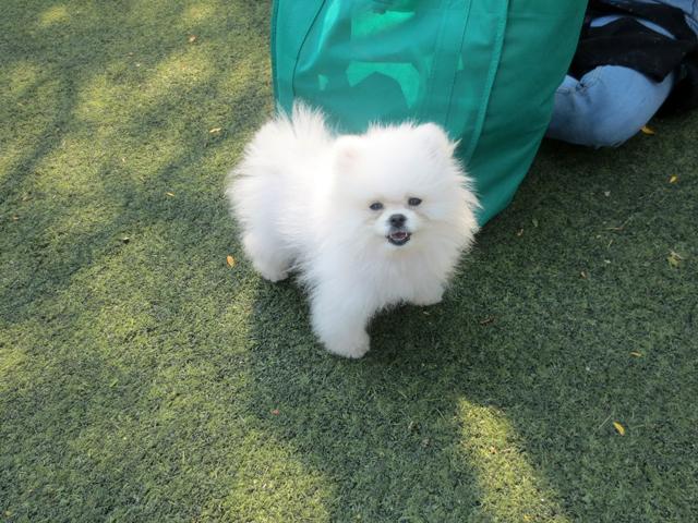 small fluffy dog