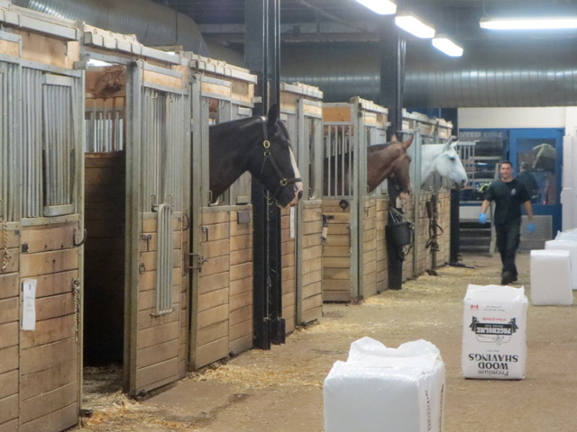 toronto police horses live at cne horse palace