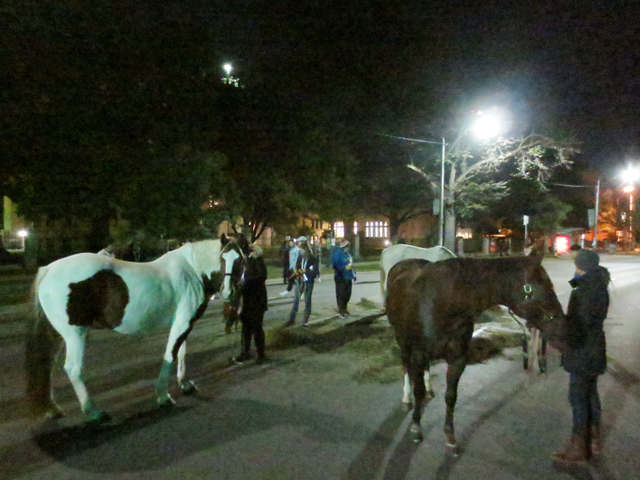 horses toronto nuit blanche taking to the streets queens park area