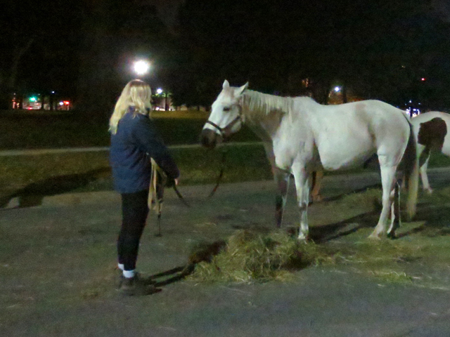 toronto nuit blanche 2017 horses at queens park taking to the streets
