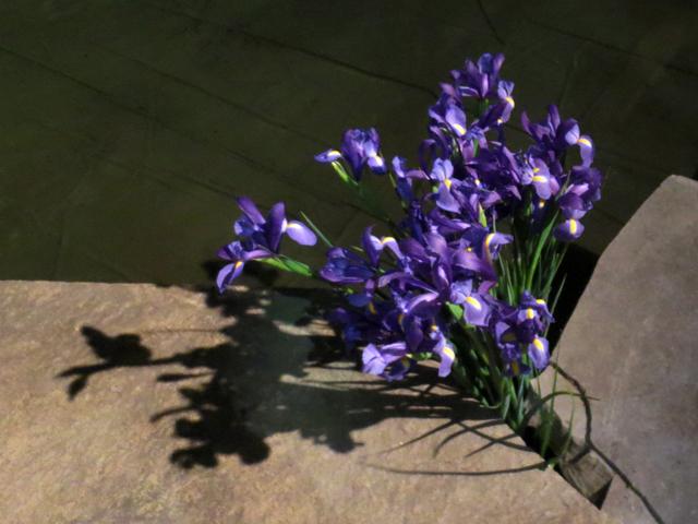 irises canada blooms show toronto