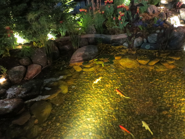 this is our movie by jackson pond water with fish at canada blooms garden show toronto