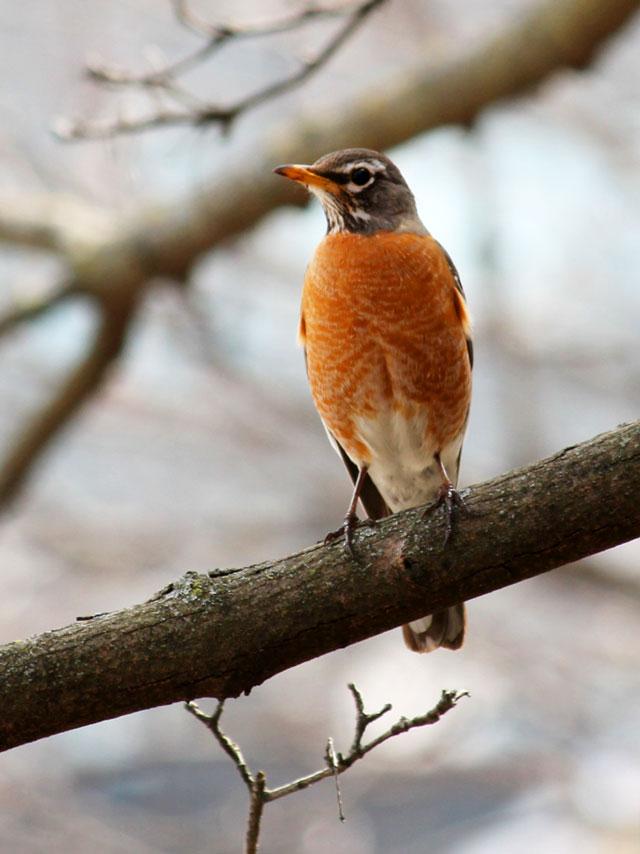 bird watching in toronto robin