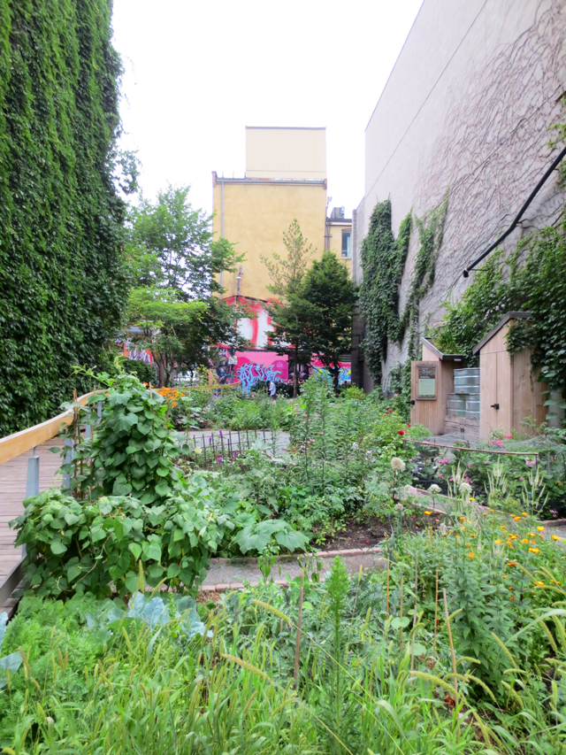 the alex wilson community garden allotment garden on richmond street toronto