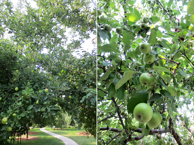 apple orchard behind spadina house in toronto