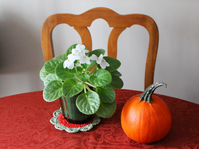 pumpkin and plant