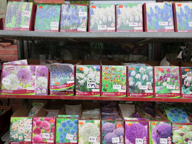 at east end garden centre toronto queen street east non tulip bulbs