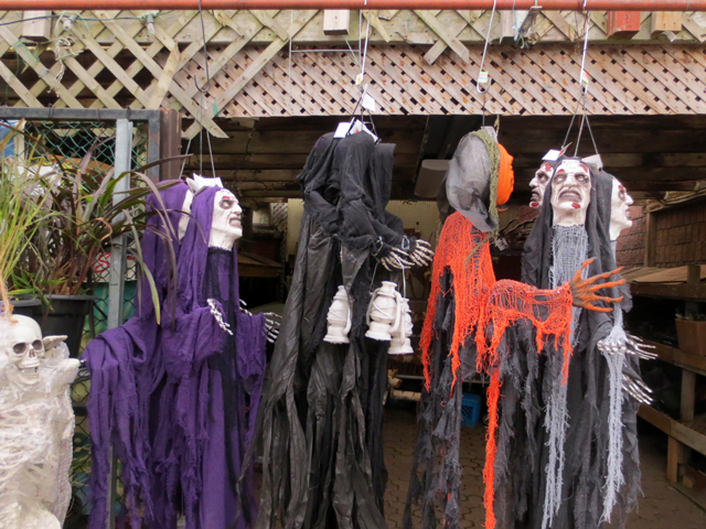 halloween decorations at east end garden centre toronto