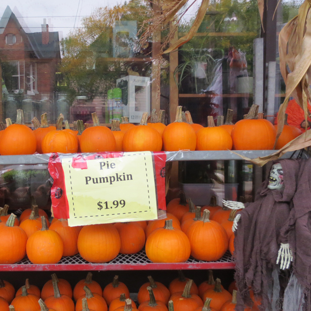 pie pumpkins at east end garden centre toronto